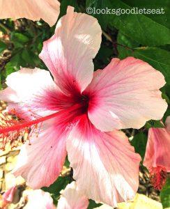 villa-flowers